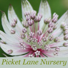 Picket Lane Nursery